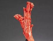 红珊瑚稀缺价格上涨快