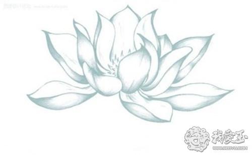 荷花是有筋骨的,自然界荷花花瓣有纵向的筋络
