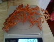 问答 | 这株红珊瑚大概价格多少了?