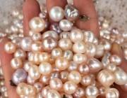 知识丨-珍珠漂流记1之剖蚌取珠篇
